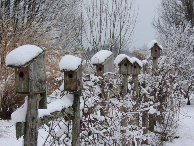 z_birdhouses
